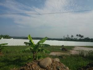 batang-farm2